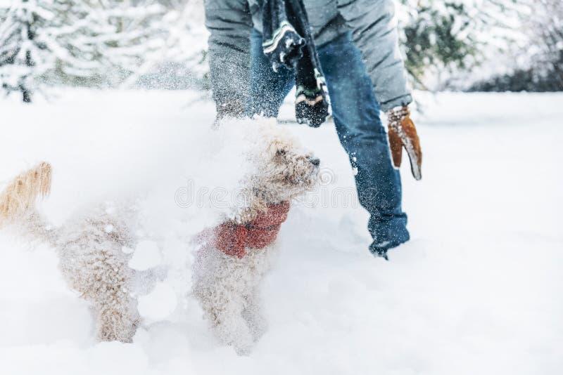 Divertimento di lotta della palla di neve con l'animale domestico ed il suo proprietario nella neve inverno uff immagine stock libera da diritti