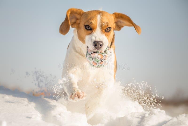 Divertimento do inverno com seu cão imagem de stock