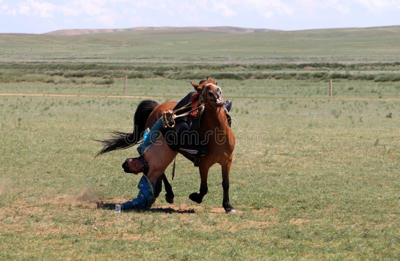 Divertimento mongolo tradizionale - giovane che monta un cavallo a briglia sciolta e che prova a decollare la terra una banconota immagini stock libere da diritti