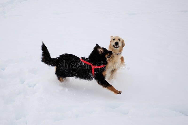 Divertimento na neve imagens de stock