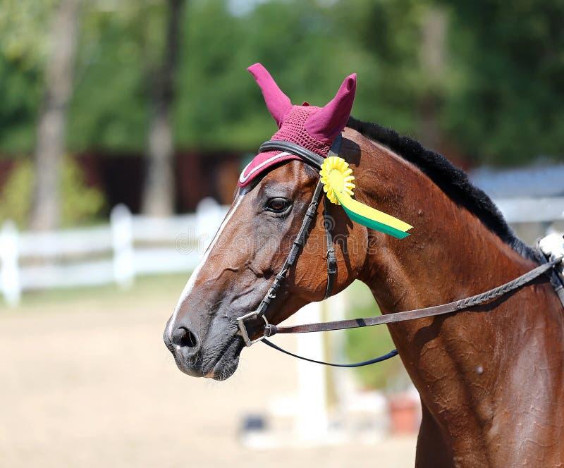 Diviértase el primer del retrato de la cabeza de caballo debajo de la silla de montar durante competitio imagen de archivo libre de regalías