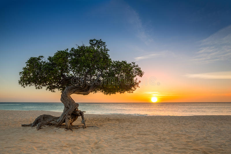 Divi-Diviboom in Aruba royalty-vrije stock foto