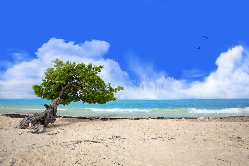 divi drzewo zdjęcia stock