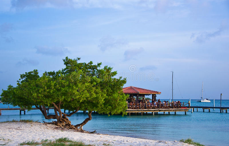 Divi Drzewo Divi, Aruba obrazy stock