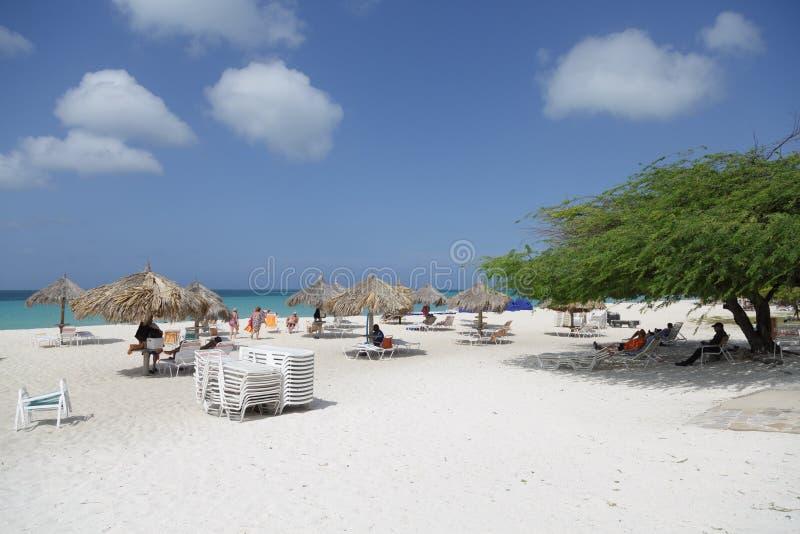 Divi-Divi Tree sulla spiaggia di Aruba fotografia stock libera da diritti