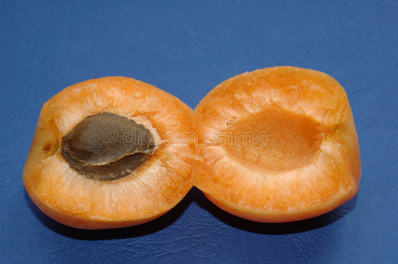 Divided apricot royalty free stock photo