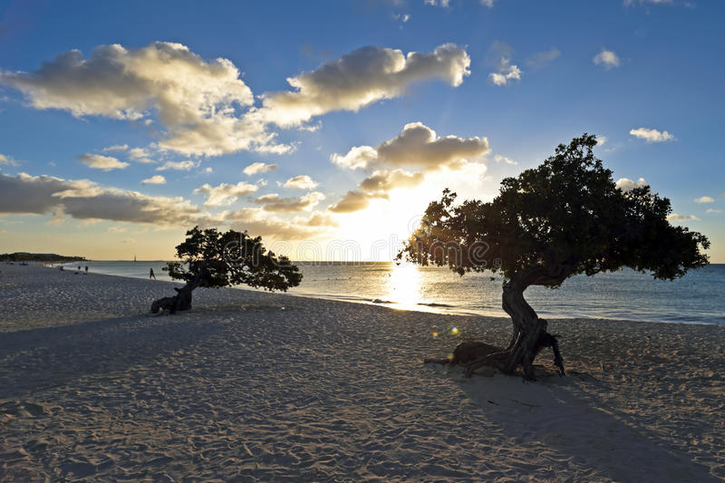 Download Dividivi trees on Aruba stock photo. Image of sand, sunset - 38291764