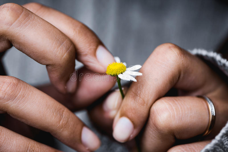 Divination on the chamomile royalty free stock photography