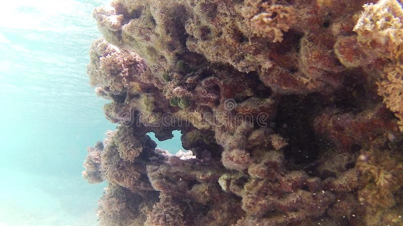 Diving in the Caribbean Sea. Coral and Atlantic Rock royalty free stock photos
