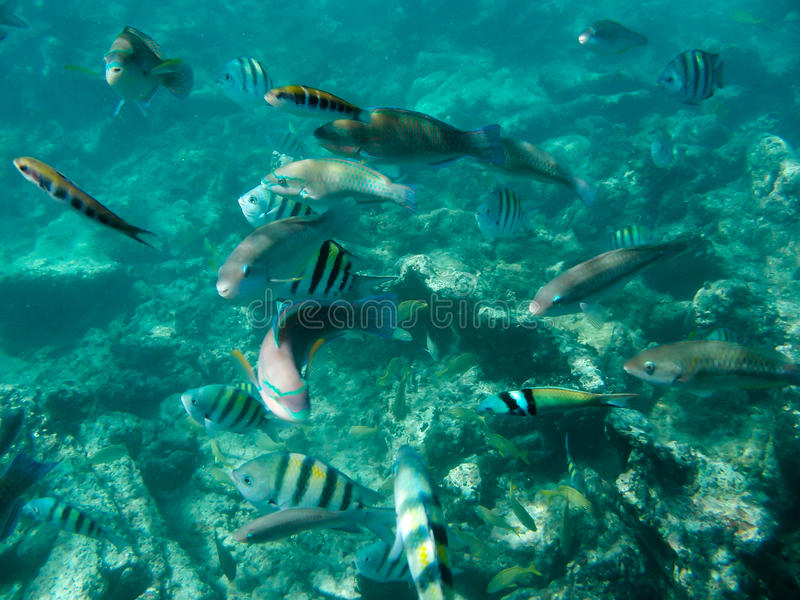 Diving in the Caribbean stock photos