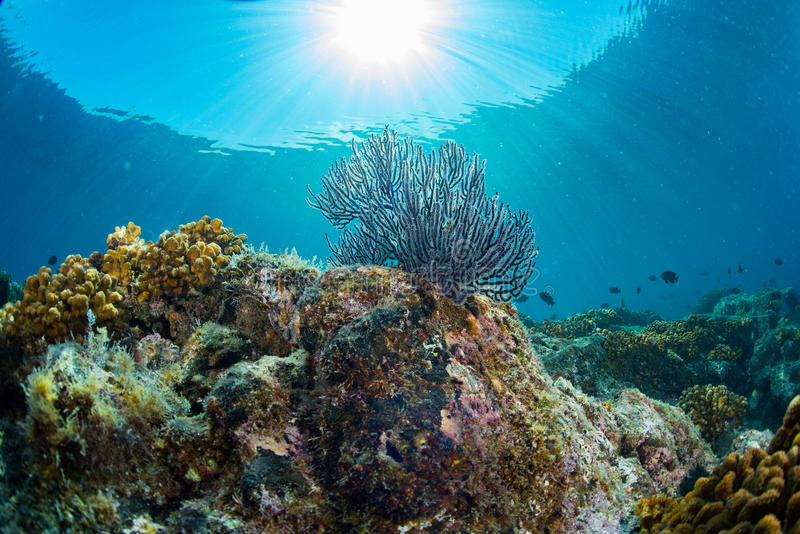Diving in colorful reef underwater royalty free stock images