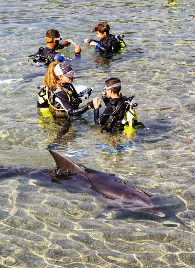 Diving with a Dolphin in Eilat, Israel royalty free stock photography