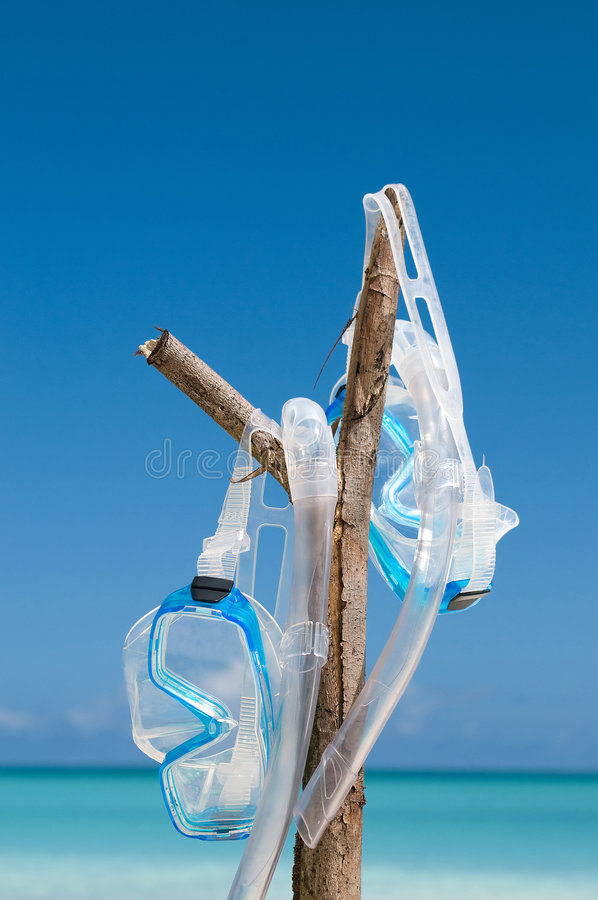 Diving mask hanging on branch