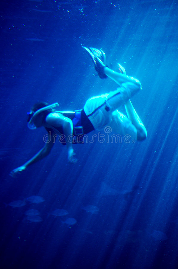 Download Diving with sharks #2 stock photo. Image of diver, stingray - 198914