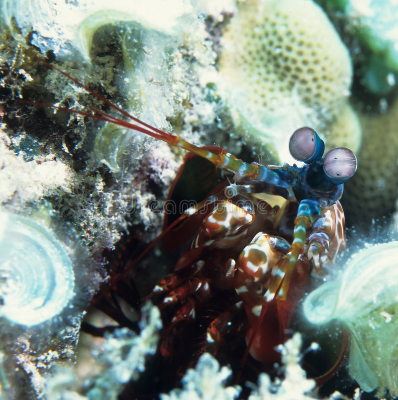 Download Diving Under Water stock photo. Image of diver, adventure - 1452876