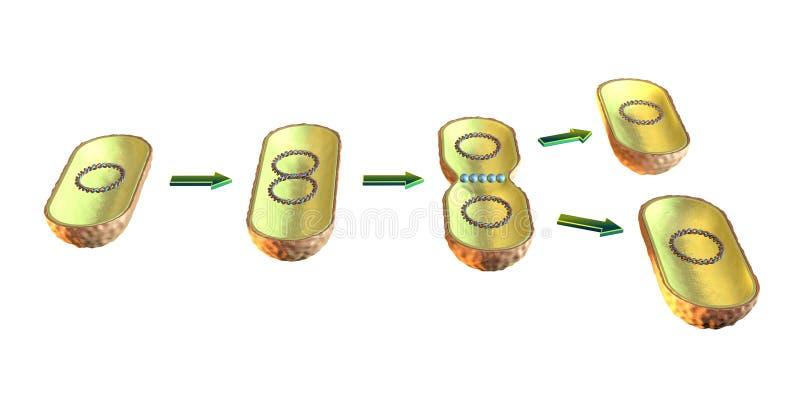 Divisão de pilha bacteriana ilustração royalty free