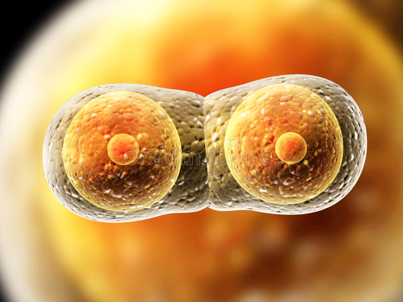 Division of cell. Process division of cell. 3d stock illustration