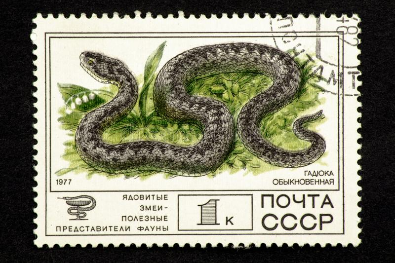 07.24.2019 Divnoe, Stavropol Territory, Russia. USSR postage stamp 1977. Series - Poisonous snakes are useful representatives of a. 07.24.2019 Divnoe, Stavropol stock illustration