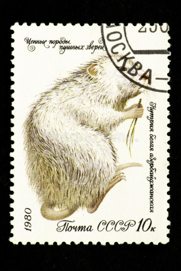 07.24.2019 Divnoe Stavropol Territory Russia - USSR postage stamp 1980. series - Valuable breeds of fur animals. Azerbaijani white royalty free illustration