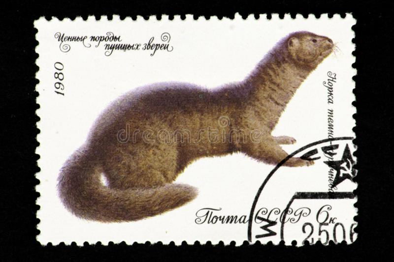 07.24.2019 Divnoe Stavropol Territory Russia - USSR postage stamp 1980. series - Valuable breeds of fur animals. The mink is dark royalty free illustration