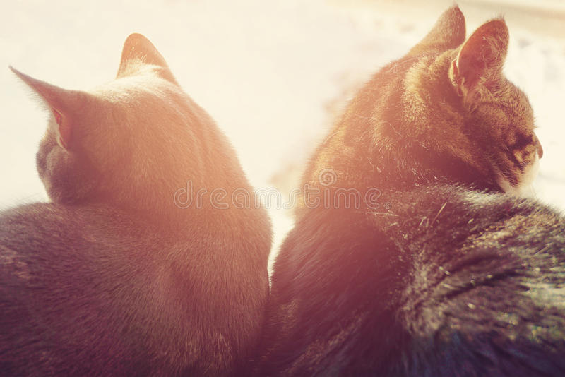 Divorce concept - two cats. Divorce concept with two cats - broken relationships royalty free stock photos