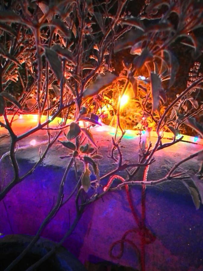 Diwali click. Bright Tulsi plant stock image