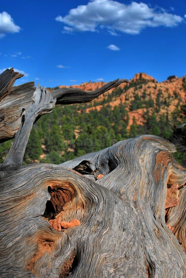 Dixie, nationaal bos, Arizona, de V.S. stock afbeelding