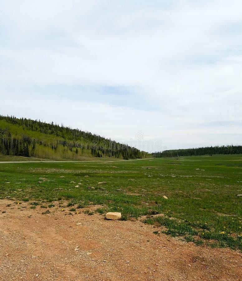Dixie National Forest, UT fotos de stock