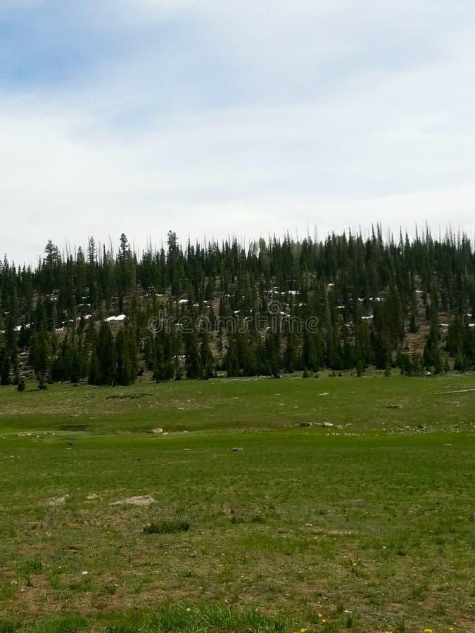 Dixie National Forest, UT fotografia de stock royalty free
