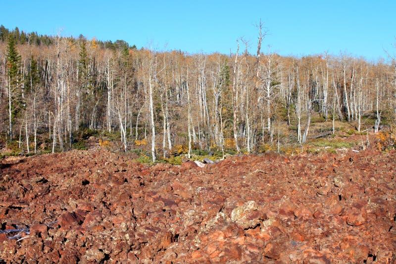 Dixie Wald-Lava-Feld stockbild