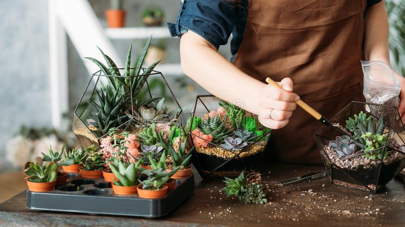 Diy florarium housewife business idea succulents. DIY florarium. Housewife business idea. Cropped shot of woman planting and growing succulents at home royalty free stock image