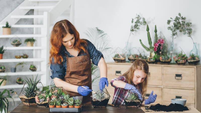 Diy florarium kreatywne hobby sadzenia sukkultur obraz stock