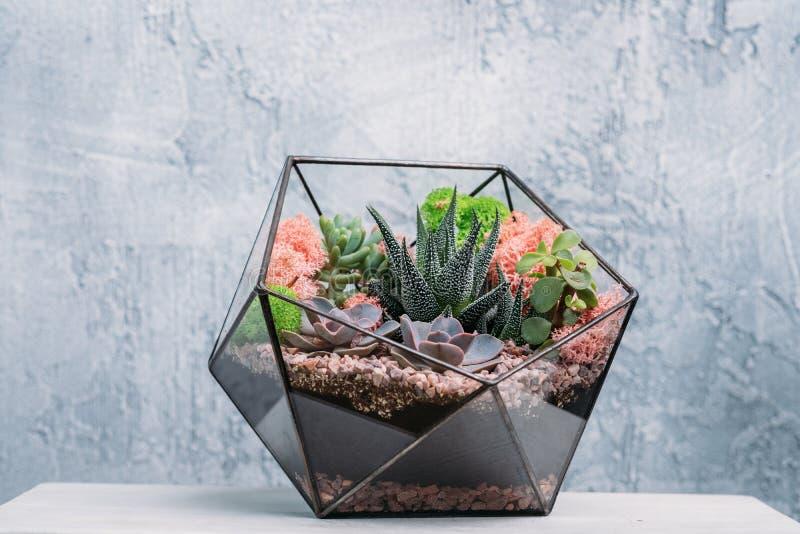 Diy florarium modern organic interior decor plants. DIY florarium. Modern organic interior decor. Colorful plants growing in glass geometric vase. Copy space stock photography