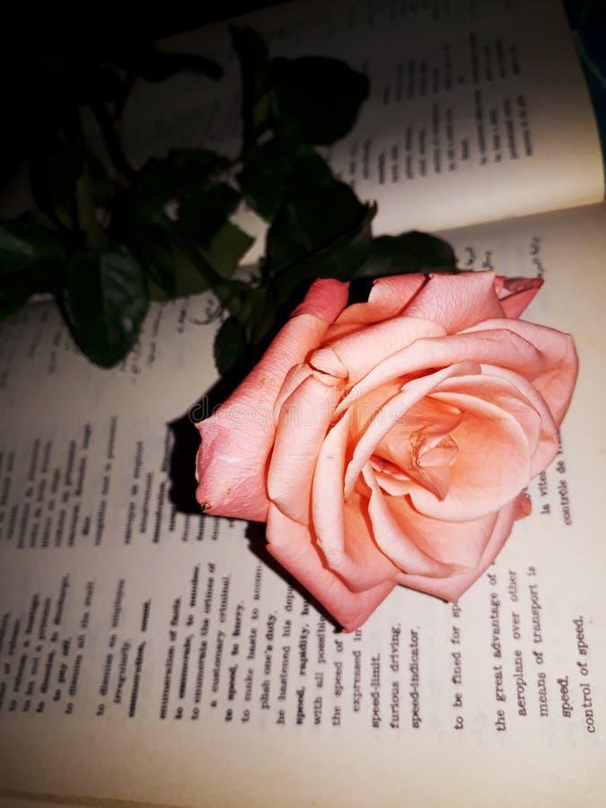 Dizionario del libro del fiore fotografie stock