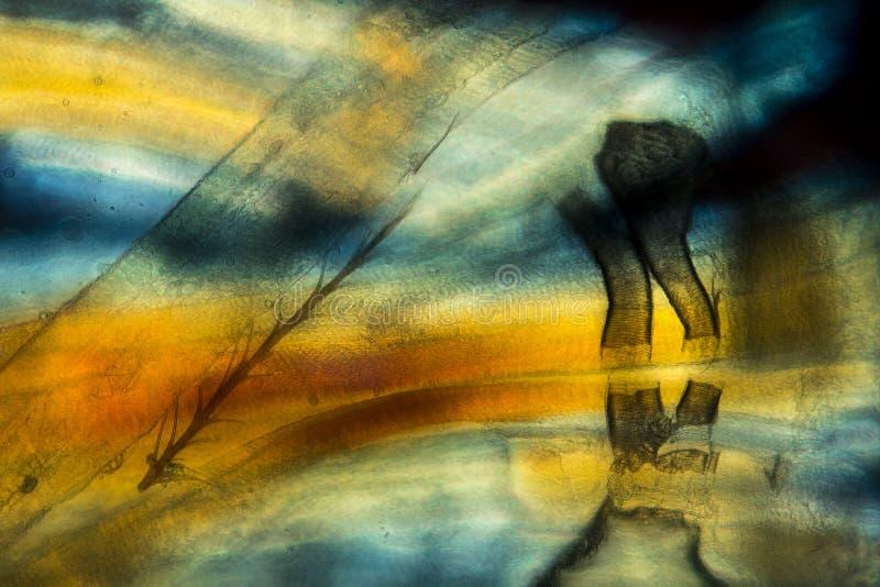 Djärv färg i ett abstrakt begrepp, polariserande micrograph av bianatomi royaltyfri bild