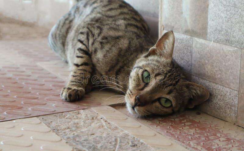Djärv katt som passionately poserar för kamera royaltyfri foto