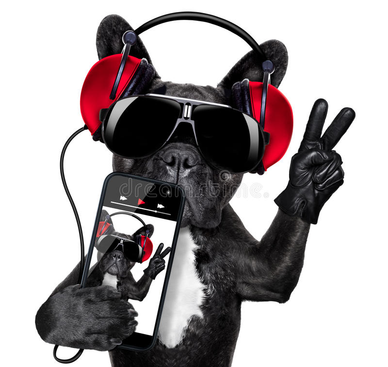 dj dog stock photo image of headphone audio peace