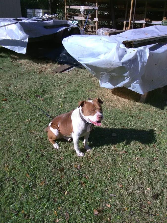 Django appréciant le soleil photo libre de droits