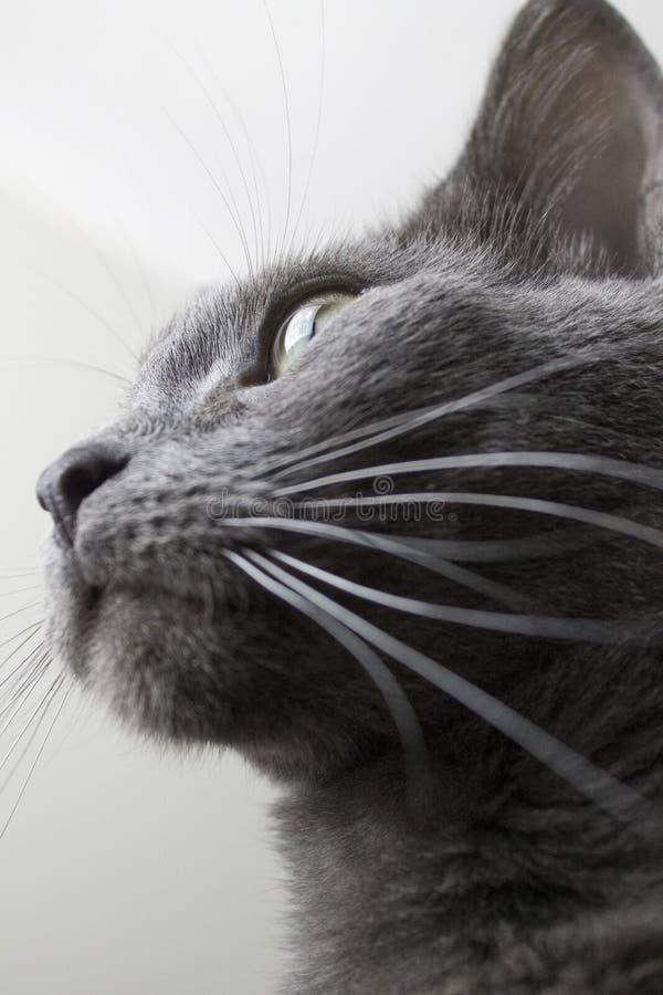 Django il gatto immagini stock