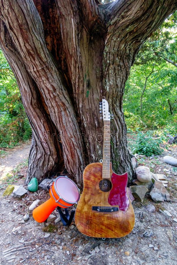Djembe drum and acoustic guitar by big juniper tree in Utrish area by Anapa, Russia. Music instruments in nature environment royalty free stock photos