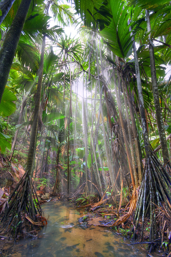 djungel arkivbild