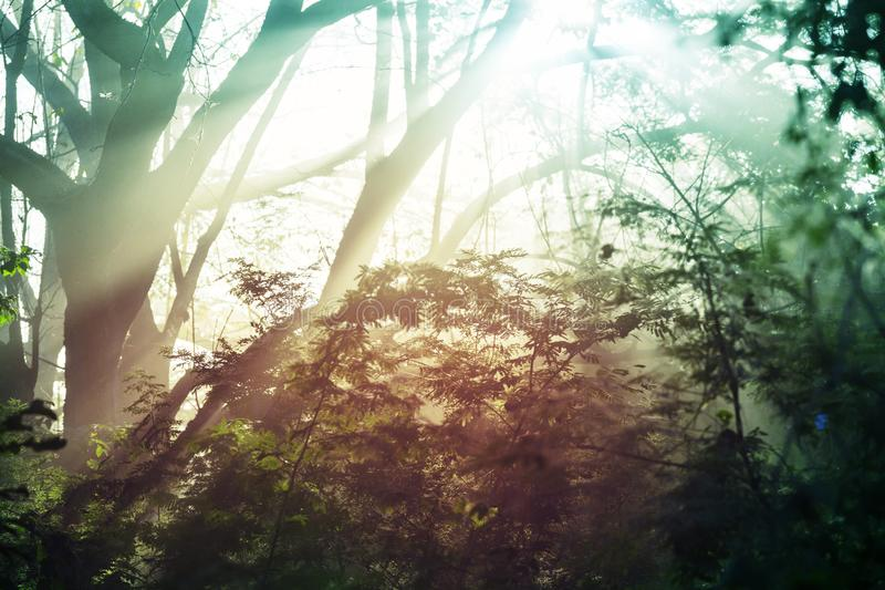 Djungel i Costa Rica fotografering för bildbyråer