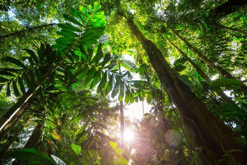 Djungel i Costa Rica royaltyfria foton