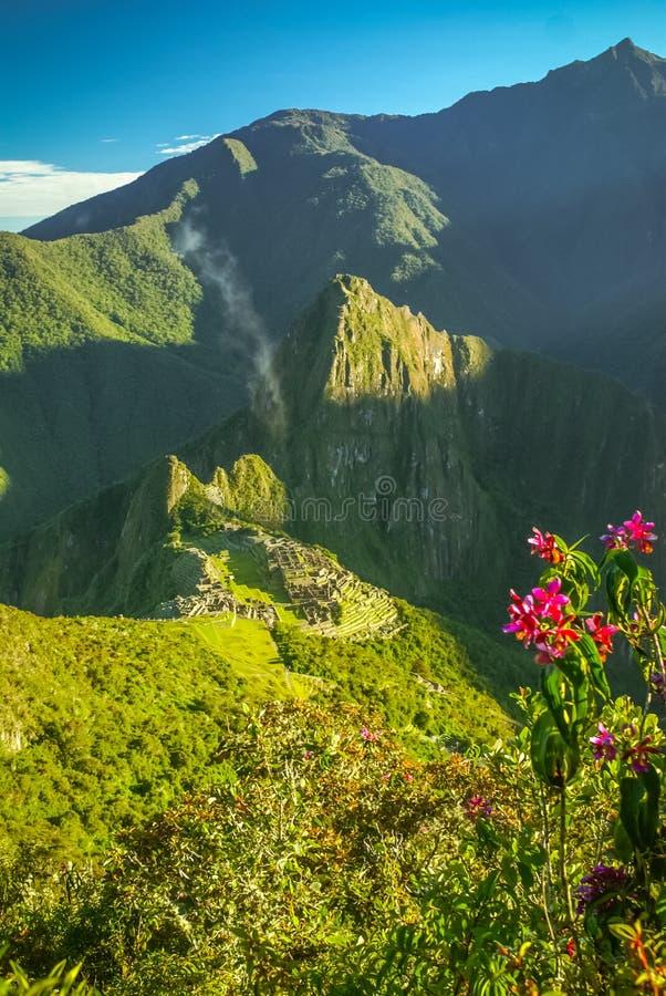 Djungel i Peru royaltyfri fotografi