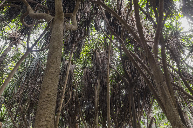 Djungel i Zanzibar royaltyfria bilder