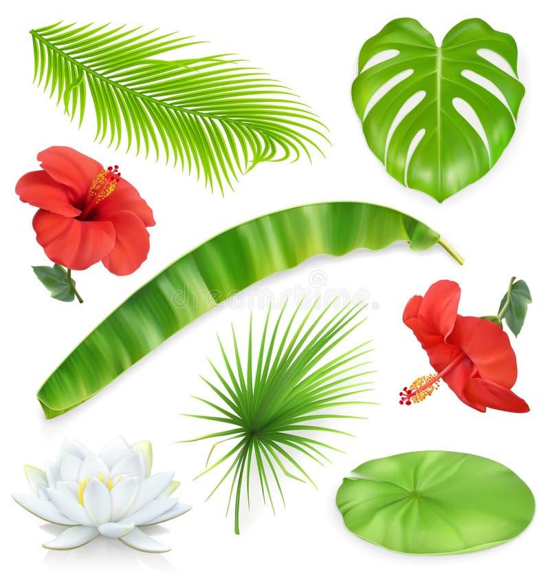 Djungel inställda blommaleaves planterar tropiskt byter ut lätta symboler för bakgrund den genomskinliga vektorn för skugga royaltyfri illustrationer