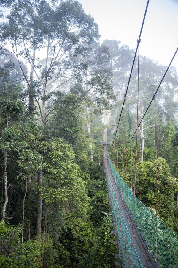 Djungelgångbana till och med Cloudforest arkivbilder
