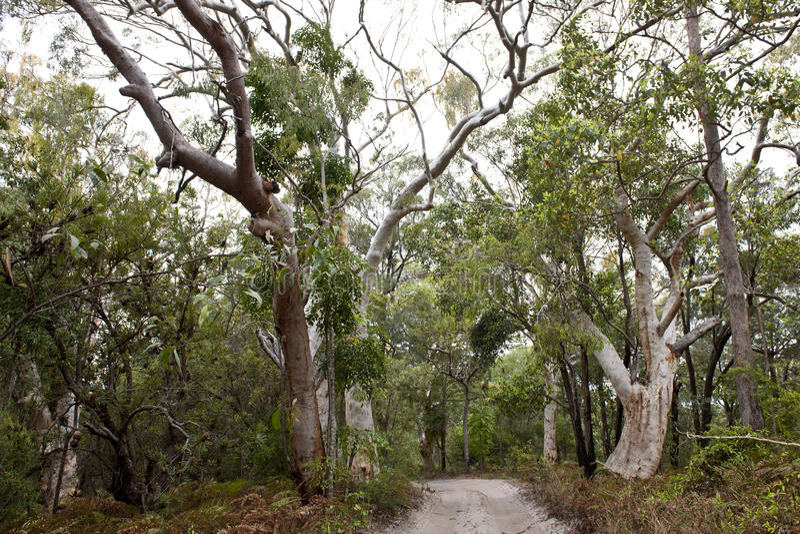DjungelskogFraser ö, Australien royaltyfria bilder