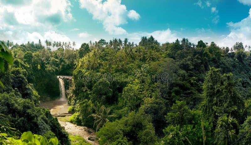 Djungelvattenfallpanorama i amazonian tropisk rainforest royaltyfria bilder