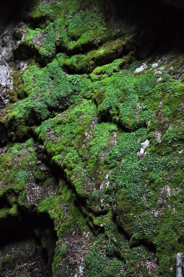 Djungelvegetation i tropisk grotta arkivbilder